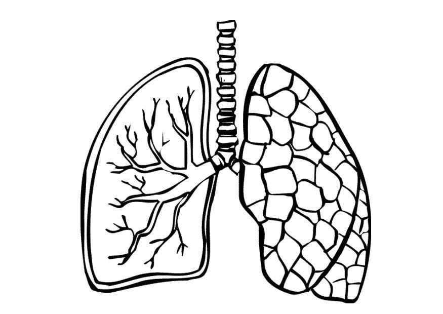 dibujo para colorear pulmones