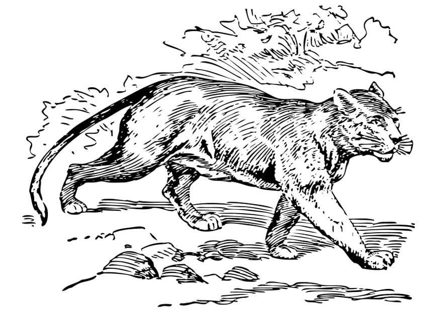 alias Golpe fuerte ficción  Dibujo para colorear puma - Dibujos Para Imprimir Gratis - Img 28316