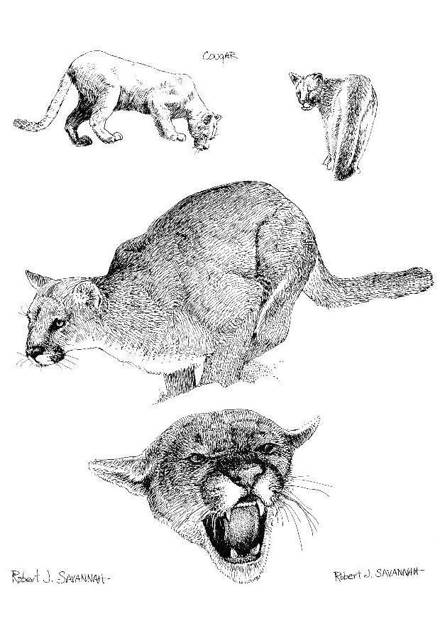 Objeción servir línea  Dibujo para colorear Puma - Dibujos Para Imprimir Gratis - Img 8546
