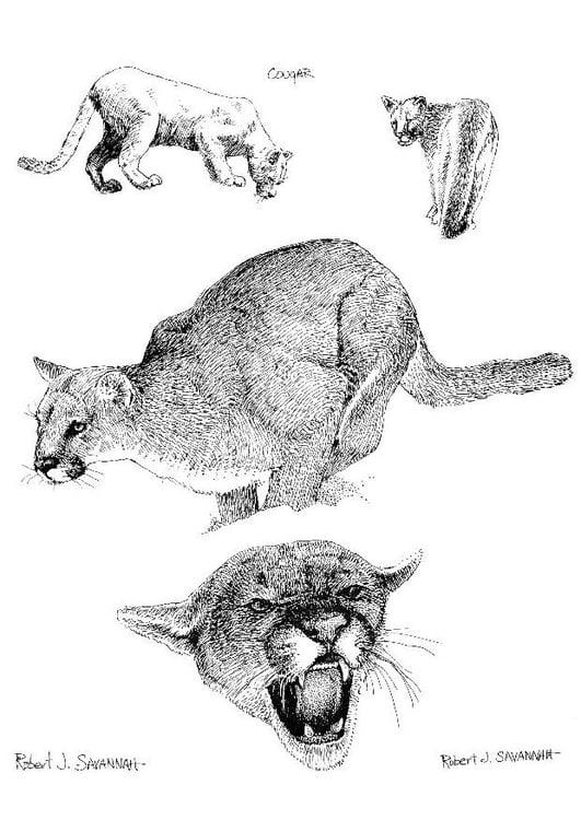 Dibujo para colorear Puma - Img 8546