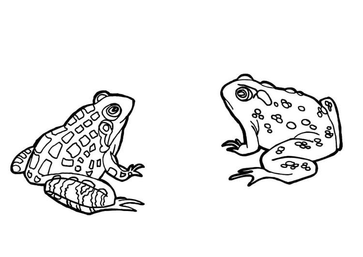 dibujo para colorear ranas