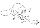 Dibujo para colorear Ratón espinoso