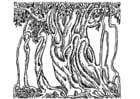 Dibujo para colorear Árbol de banyan