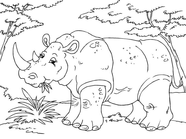 Dibujo para colorear rinoceronte - Img 23016