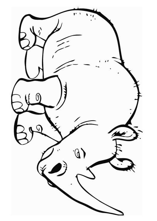 Dibujo para colorear Rinoceronte - Img 12751