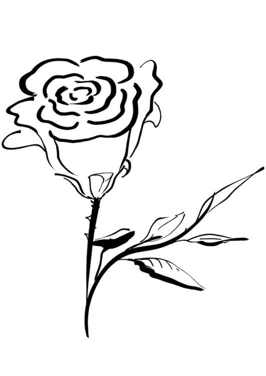 Dibujo para colorear rosa - Img 21265