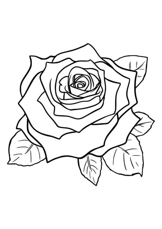 Dibujo para colorear rosa - Img 29751