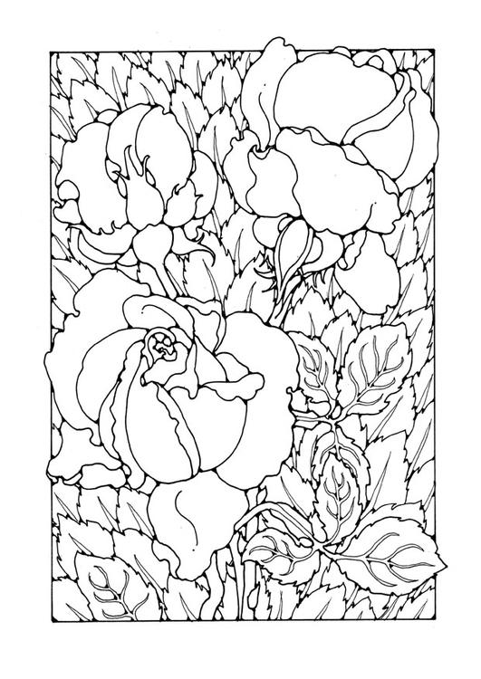 Dibujo Para Colorear Rosas Img 27745 Images