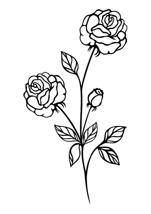 Dibujo para colorear rosas - Img 29722