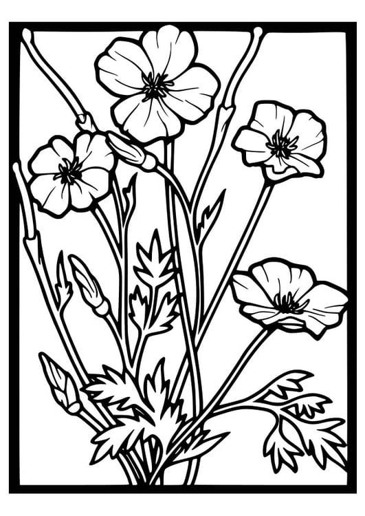 Dibujo para colorear rosas silvestres - Img 18647