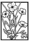 Dibujo para colorear rosas silvestres