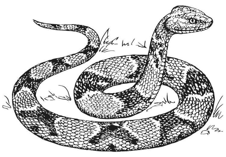Dibujo para colorear Serpiente Mocasín - Img 15740