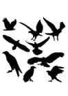 Dibujo para colorear siluetas de águilas
