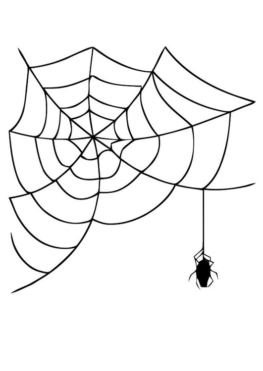 Dibujo Para Colorear Telaraña Con Araña Img 19625