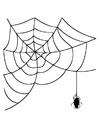 Dibujo para colorear telaraña con araña