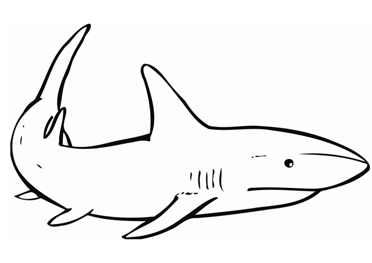 Dibujo para colorear Tiburón - Img 12837