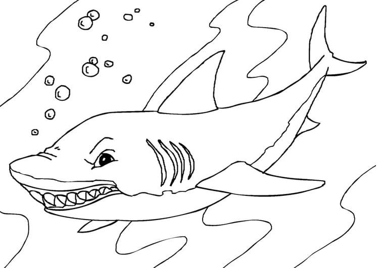 Dibujo para colorear tiburón - Img 27232