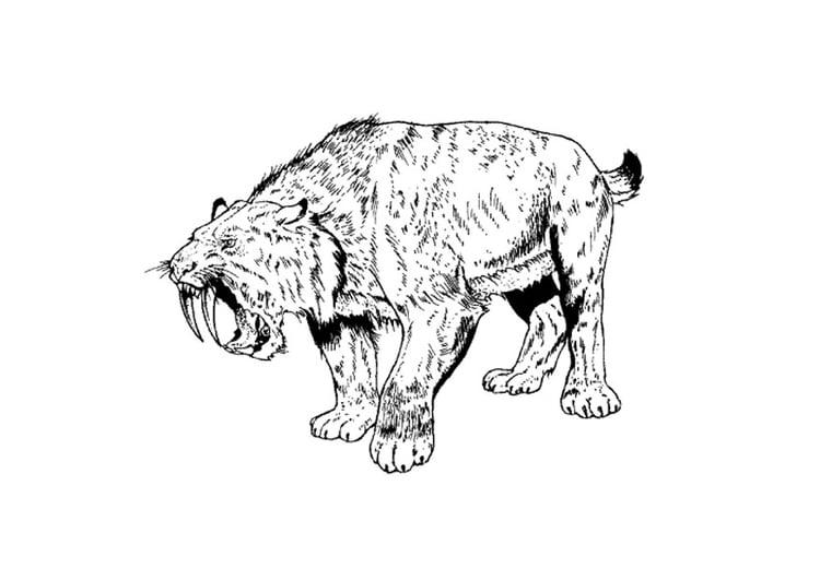 Dibujo para colorear tigre dientes de sable img 9106 - Immagini dei denti da colorare ...