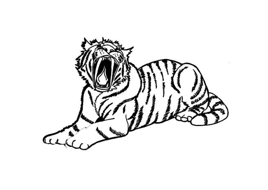 Dibujo Para Colorear Tigre Img 9695