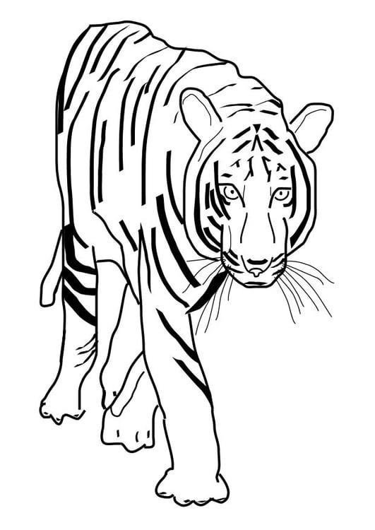 Dibujo Para Colorear Tigre Img 10101