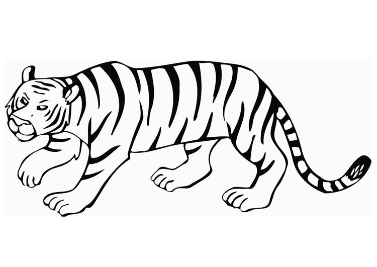 dibujo para colorear tigre img 12849