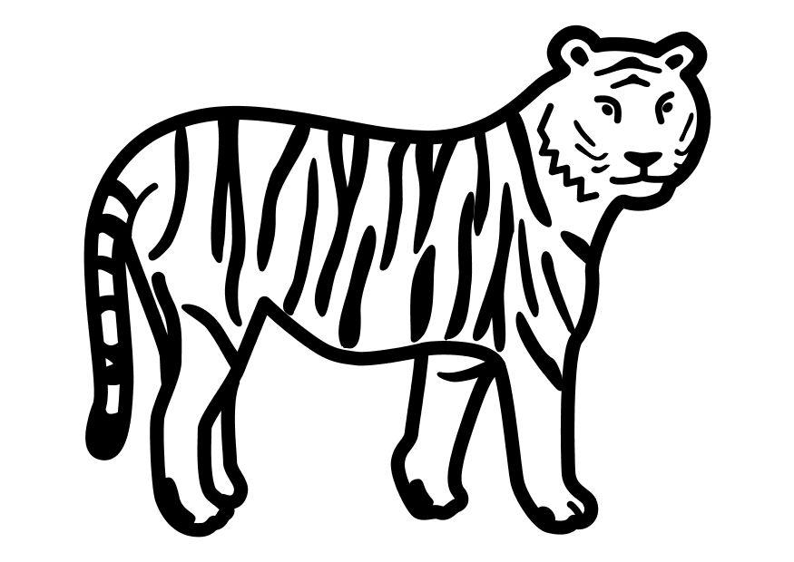 dibujo para colorear tigre parado img 10491