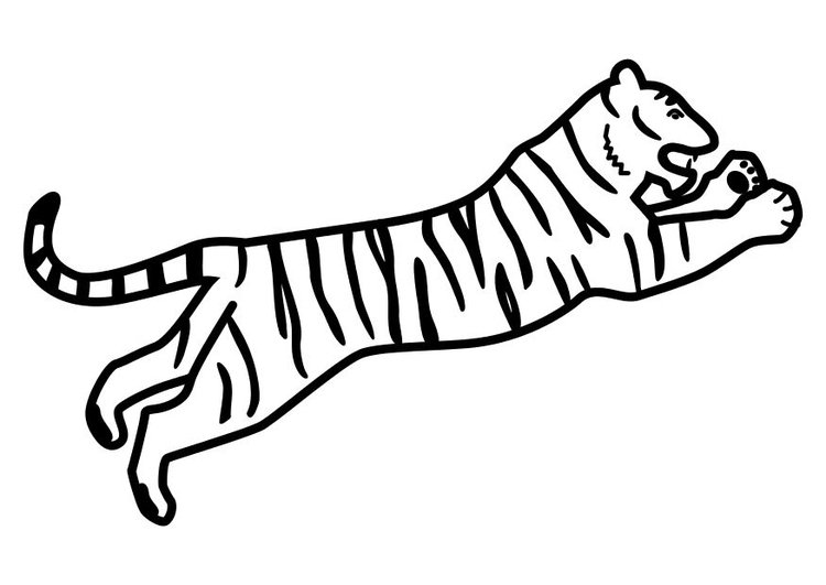 Dibujo Para Colorear Tigre Saltando Img 10490 Images