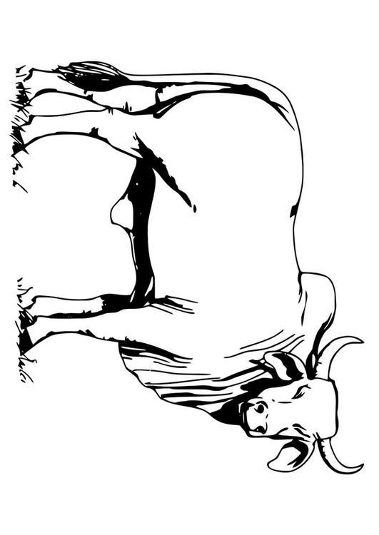 Dibujo para colorear toro - bahman - Img 19622