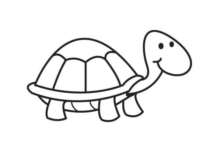 Imagenes Para Colorear Tortuga