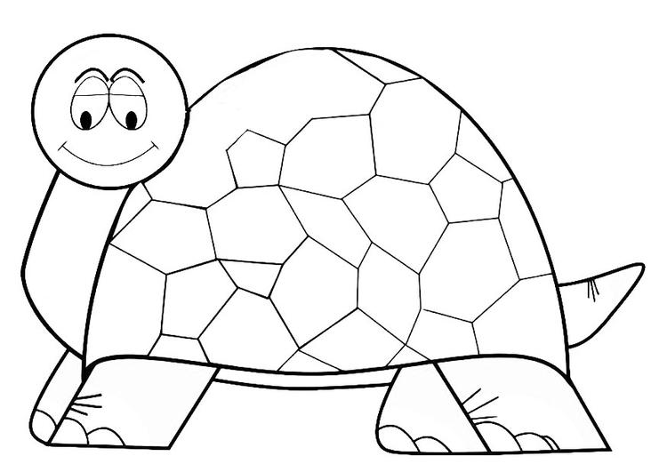 Dibujo para colorear tortuga - Img 19634