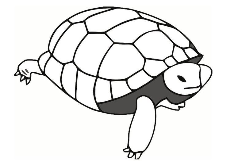 Dibujo Para Colorear Tortuga Dibujos Para Imprimir Gratis