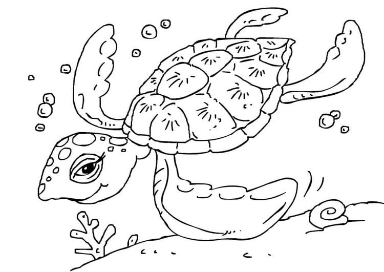 Dibujo para colorear tortuga - Img 27229