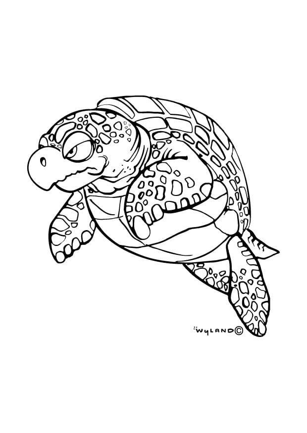 Dibujo Para Colorear Tortuga Marina Img 9016