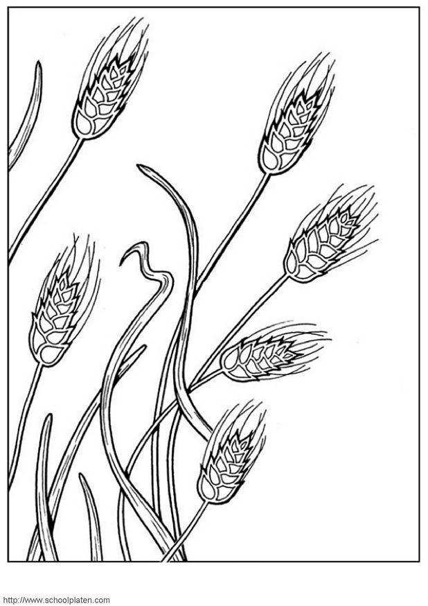 Dibujo para colorear Trigo - Img 3905