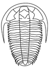 Dibujo para colorear trilobita