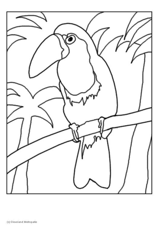 Dibujo Para Colorear Tucán Dibujos Para Imprimir Gratis