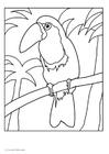 Dibujo para colorear Tucán