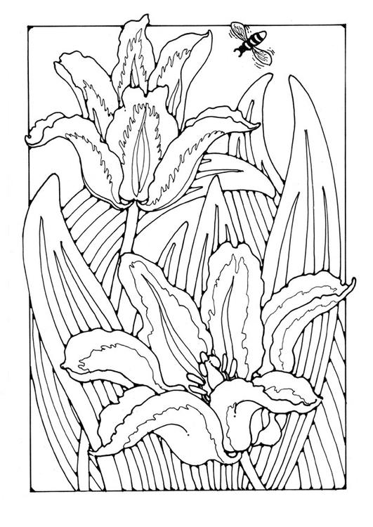 Dibujo para colorear tulipanes - Img 27785