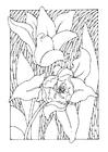 Dibujo para colorear tulipanes