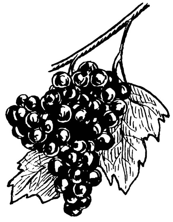 Dibujo para colorear Uvas  Img 15707