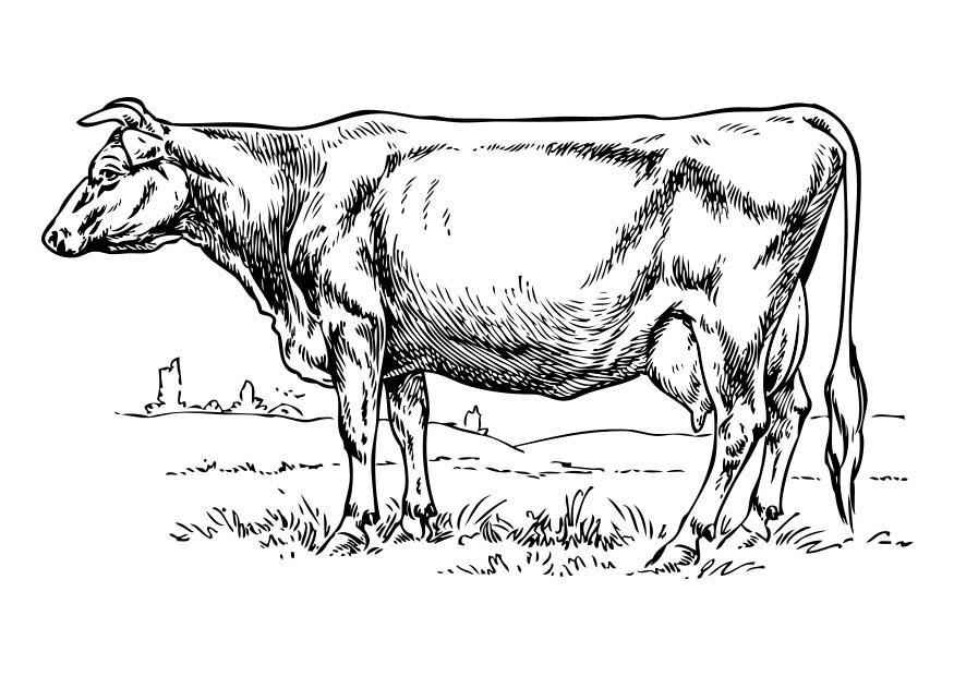 Dibujo Para Colorear Vaca Img 17365