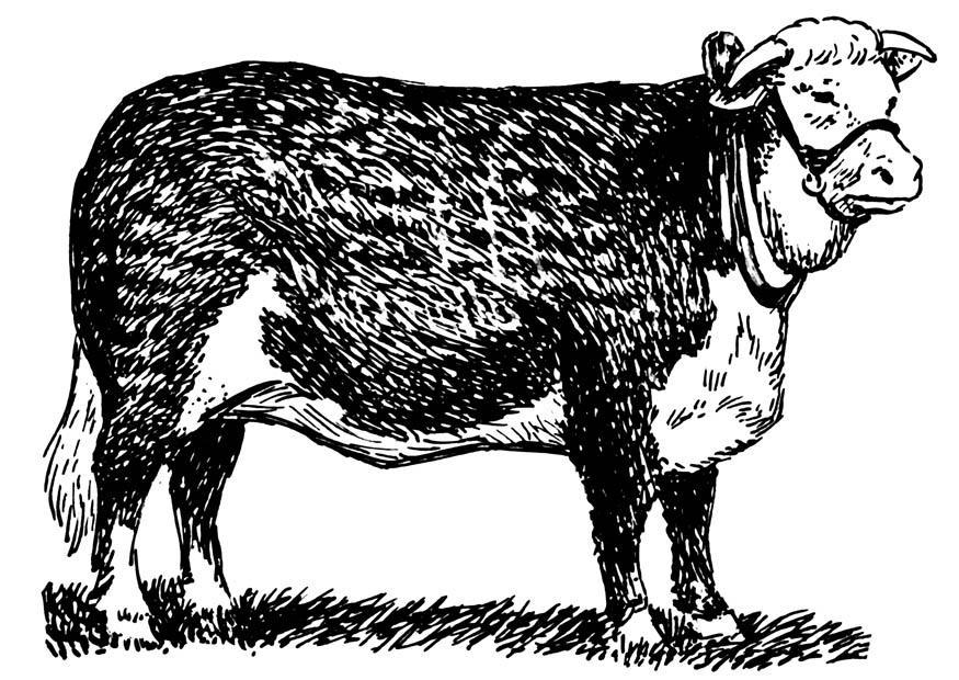Dibujo para colorear vaca hereford