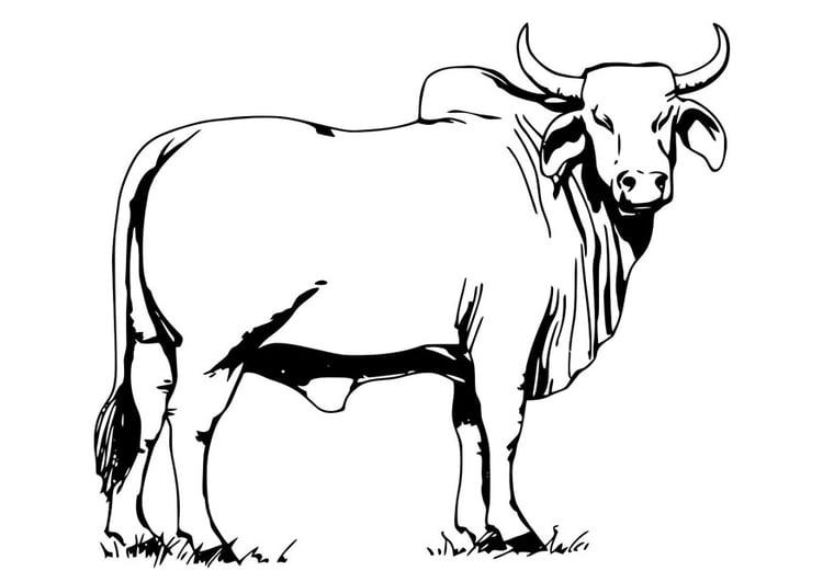 Dibujo para colorear vaca sagrada - Img 19646