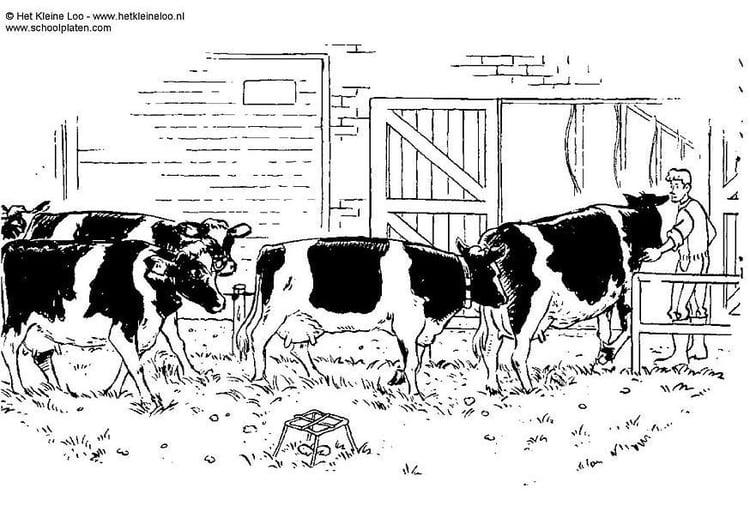 Dibujo para colorear Vacas - Img 3731