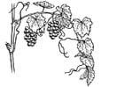 Dibujo para colorear Viña
