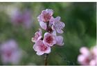 Foto 3. flores - al principio de la primavera