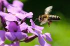 Foto abeja