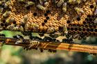 Foto abejas