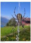 Foto Araña en tela araña