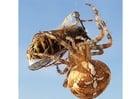 Foto Araña atrapa a un avispa